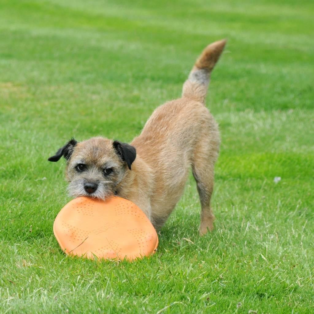 Hondenfrisbee van Rubber