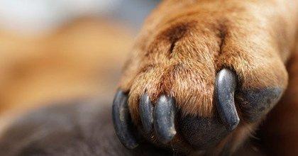 Hoe knip je de nagels van je hond?