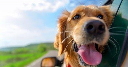 Hond mee op vakantie. Waar moet je aan denken?