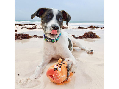 Lanco Bulldog Groot speelgoed (kleine tot middelgrote honden)