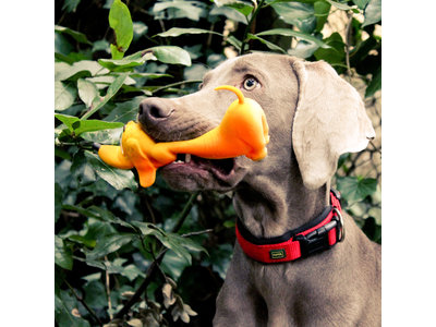 Lanco Basset Groot speelgoed (kleine tot middelgrote honden)