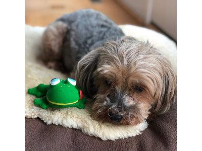 Lanco Klassieke Kikker speelgoed (kleine tot middelgrote honden)