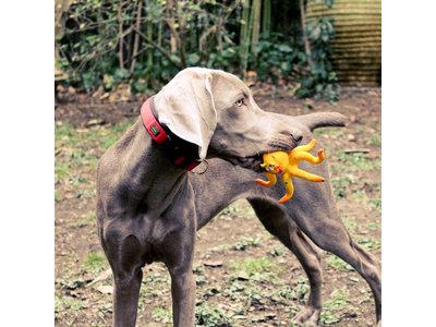 Lanco Octopus Groot speelgoed (grote honden)