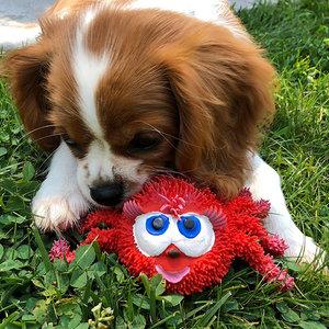 Hondenspeelgoed voor tanden wisselen Spin