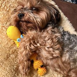 Hondenspeelgoed voor tanden wisselen Slang