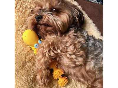 Puppy Speelgoed voor tanden wisselen met zachte pieper - Lanco Slang - 9,5x14x6cm
