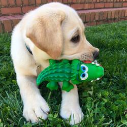 Lanco hondenspeelgoed Krokodil Medium