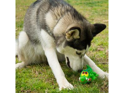 Stimulerend Hondenspeelgoed, Veilig en Milieuvriendelijk - Lanco Krokodil - 14x8x5cm