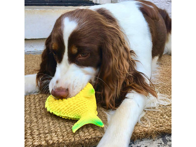 Stimulerend Hondenspeelgoed, Veilig en Milieuvriendelijk - Lanco Vis - 14x8x5cm
