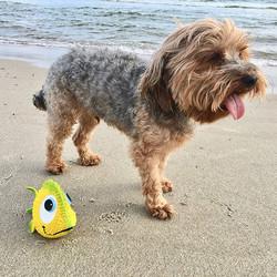 Lanco hondenspeelgoed Vis