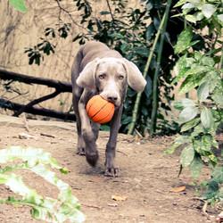 Lanco hondenspeelgoed Basketbal Large