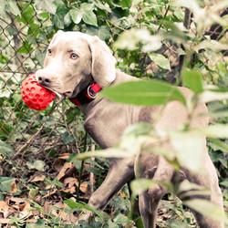 Lanco hondenspeelgoed Rode Bal Medium