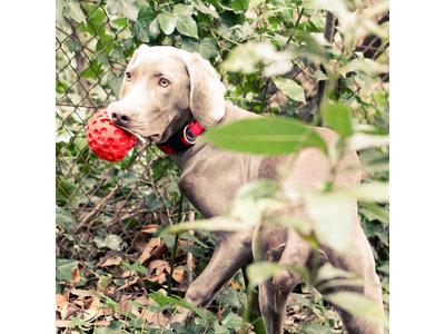 Hondenspeelgoed met kauwstructuur en zachte pieper - Lanco Rode Bal Medium 10cm