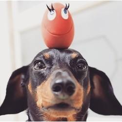 Lanco hondenspeelgoed Lachend Ei Groot