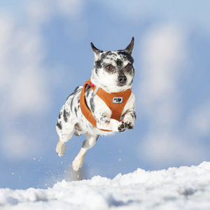 Curli - Air Mesh Honden Instap Tuigje - XXS Oranje