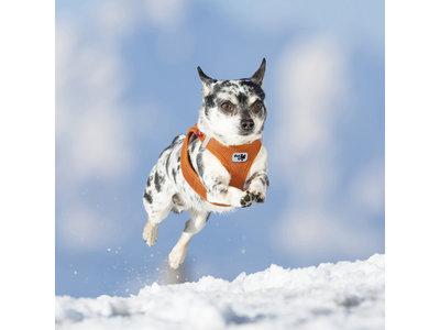 Trendy, Lichtgewicht Comfortabel Instap Honden Tuigje - Curli Air-Mesh in Oranje - XXS