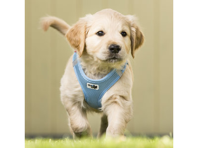 Curli Puppy Set - Instap Honden Tuigje + Hondenriem