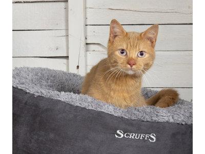 Voordelige Comfortabele Kattenmand in het grijs