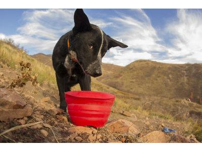 Inklapbare voerbak voor honden
