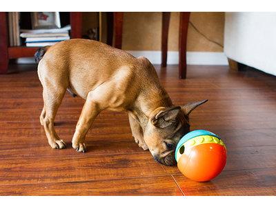 Treat Chaser interactieve hondenpuzzel