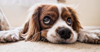 De beste tips om je hond alleen thuis te laten