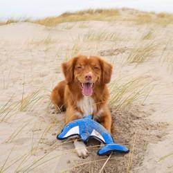 Pluche Hondenknuffel met Pieper Dolfijn