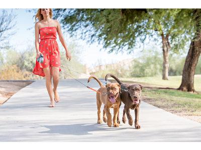 Oprolbare Uitlooplijn voor twee honden - Eenvoudig 2 honden tegelijk uitlaten - Wigzi in 2.0 of 3.0