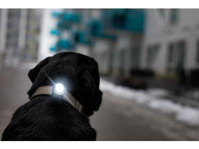Orbiloc Veiligheidslampje voor Hondenhalsband