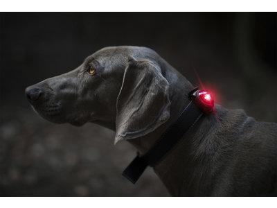 Veiligheidslampje voor Hondenhalsband - Waterdicht & Schokbestendig - Orbiloc - Rood, Blauw, Geel, Wit & Groen