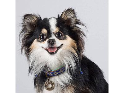 Dog with a Mission hondenhalsband Stella Blue