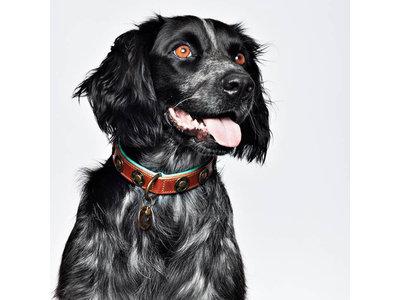 Sterke leren hondenhalsband van dik tuigleer met design munten - Dog with a Mission Urban - in XXS tot XXL