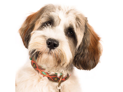 Prachtige, Zacht Leren Hondenhalsband met waanzinnig mooi handwerk - Dog with a Mission Joplin - van XXS tot XXL