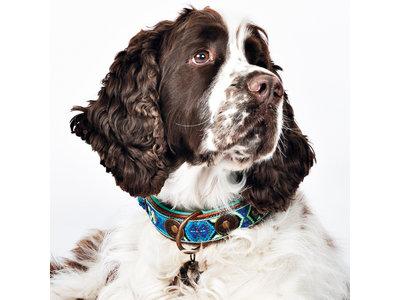 Dog with a Mission hondenhalsband Boho Juan