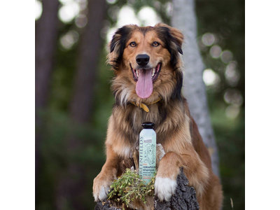 Hondenshampoo voor Gekleurde Vacht - Greenfields - 250 ml