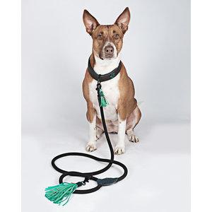 Dog with a Mission - Hondenriem Boy