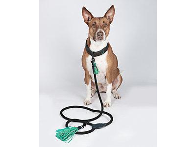 Hondenriem Boy - Dog with a Mission