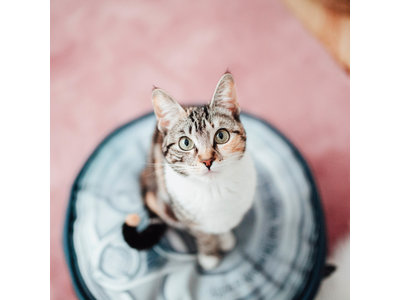Blik Kattenmand in 3 kleuren - District 70 TIN Pouf - Iron, Roest & Zand