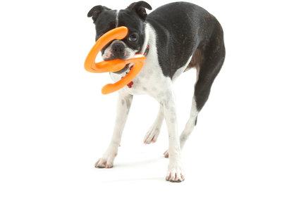 Sterke multifunctionele werpstok voor honden - West Paw Bumi - met Zogoflex - B Corp