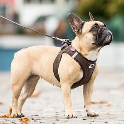 Honden Instap Tuigje - Ribfluweel