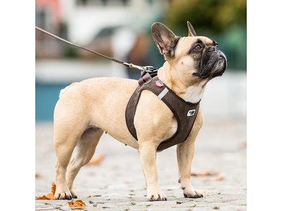 Ribfluweel, Lichtgewicht Comfortabel Instap Honden Tuigje - Curli Cord in diverse Kleuren XXS tot L