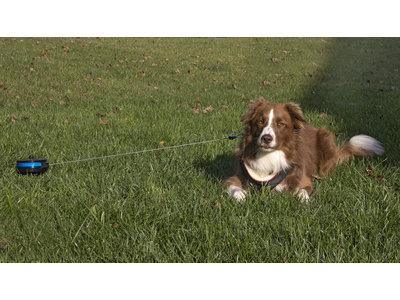 Intrekbare oprollijn met bodempin 4,5mtr of 6mtr voor honden tot 15kg en van 35 tot 55kg