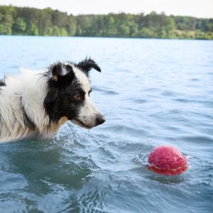 West Paw Boz - Zachte en sterke speelbal voor honden met Zogoflex Air