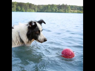 Zogoflex Air Boz zachte en sterke hondenspeelbal