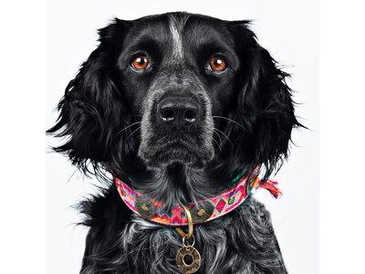 Leren Hondenhalsband met Kleurrijk Bohemian Design - Dog with a Mission Boho Rosa - XXS tot XXL