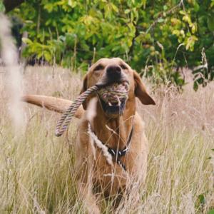 Duurzaam hondentouw met lus van henneptouw