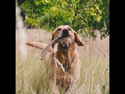 Duurzaam hennep hondentouw met lus - Beco Pets Flostouw - Twee maten verkrijgbaar