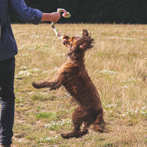 Duurzaam hondentouw met pieper, van henneptouw