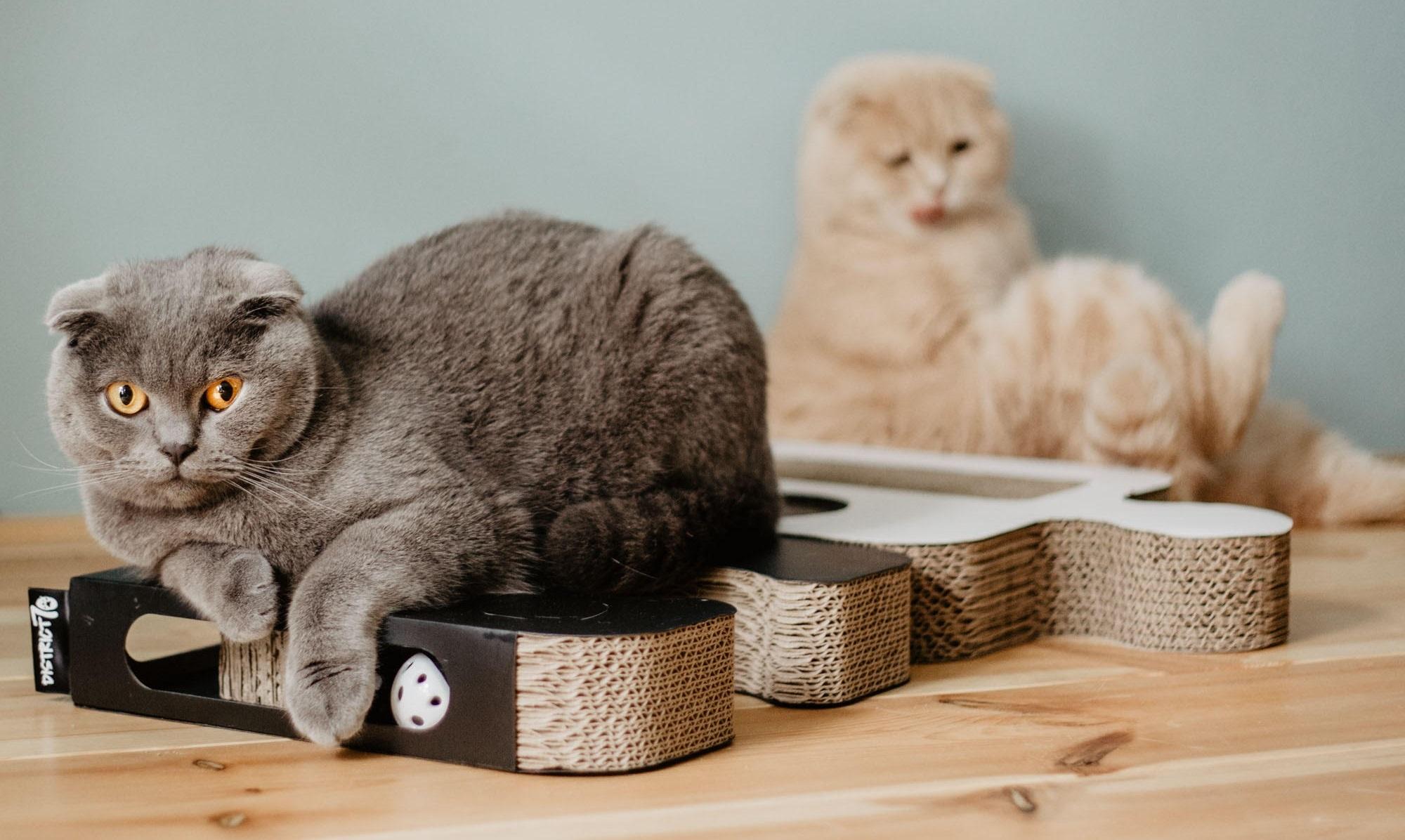 krabmeubel kat