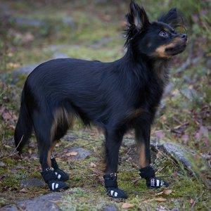 Stijlvolle beschermende hondenschoenen