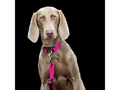 Verstelbare hondenhalsband in drie kleuren